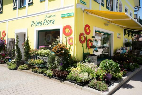 Prima Flora - Monika Huber